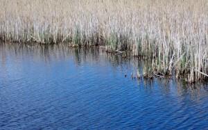 Pierwsza oznaka wiosny nad jeziorem.