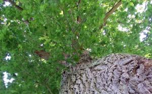 Drzewa zazieleniały