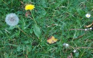 Trzy pory roku: wiosna, lato i jesień