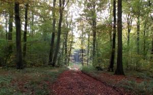 Spacer w lesie - na końcu zawsze zaświeci słońce