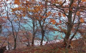 Krystalicznie czysta woda i jesienne barwy lasu bukowego