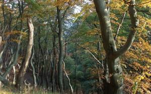 Bukowy las jesienią