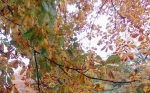 Jesienna kompozycja