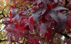 Jesienny barwy