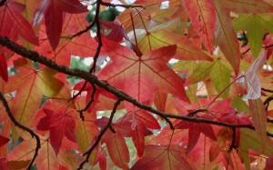 Kompozycja z barwami jesieni