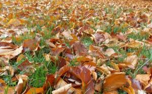 Trawa jeszcze nie wie, że nadeszła jesień