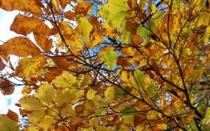 Jesienna impresja z błękitnym niebem