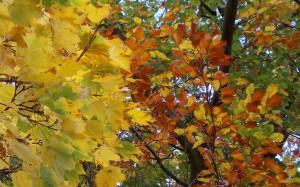 Jesienna paleta kolorów