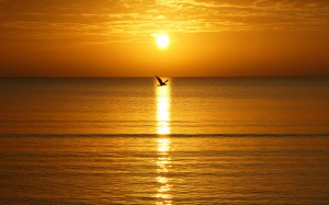 Ptak w porannym słońcu.