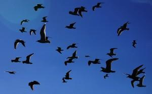 Ptaki Ptaki Hitchcocka I.