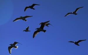 Ptaki Ptaki Hitchcocka VII.