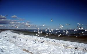 Mewy nad zimową plażą.