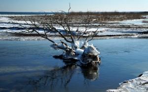 Drzewko skute lodem.
