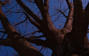 Drzewa jeszcze śpią, zimowym snem.