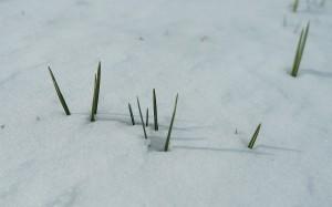 Pierwszy przejaw wiosny.