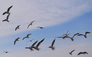 Podniebne ptaki.