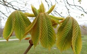 Narodziny liścia